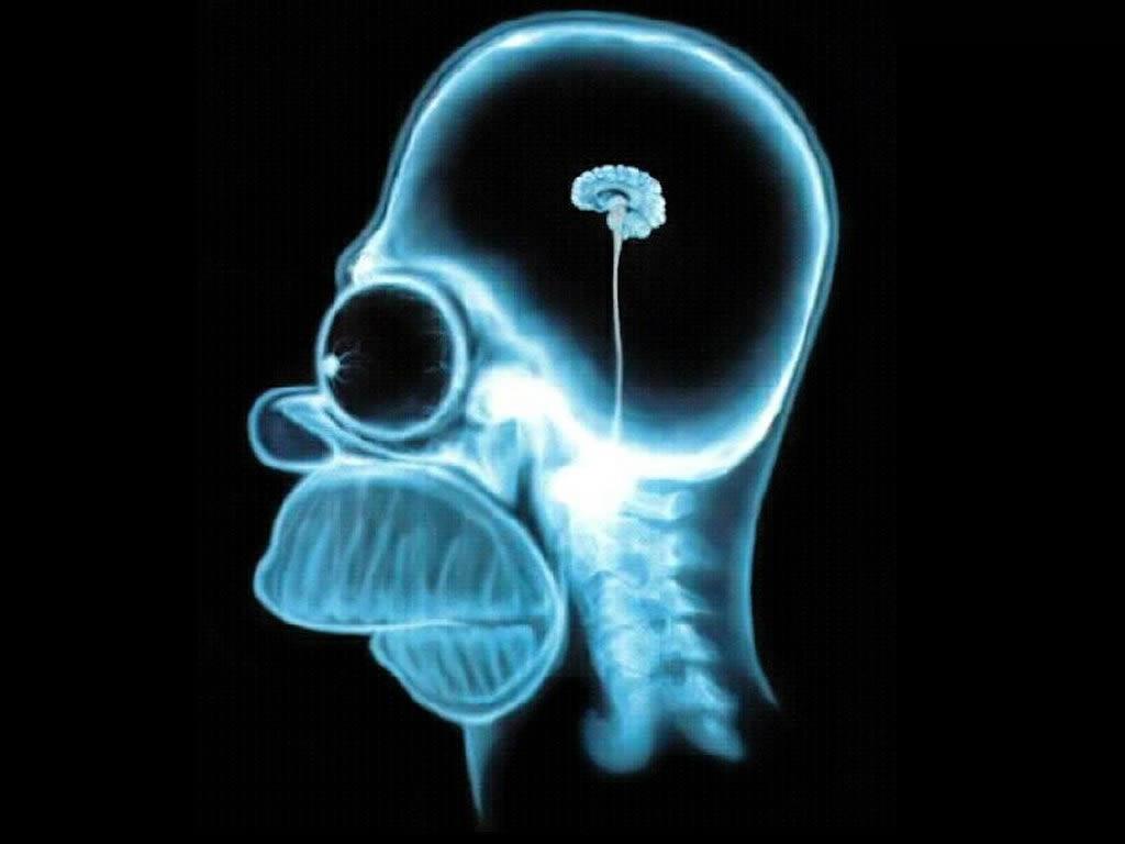 Homer-simpson-wallpaper-brain-1024